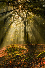 Umbrella (Ellen van den Doel) Tags: autumn natuur landscape nature mist nederland outdoor licht bos herfst trees bomen landschap sunrays forest zonnenstralen bergenopzoom fog netherlands light november2019 fall noordbrabant