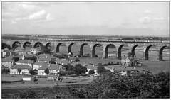 The Royal Border Bridge (gbw,76/25/03) (geoff7918) Tags: berwick royalborderbridge deltic 16071976
