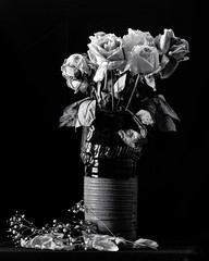 52 Frames - Week 46 - Still Life (TAWPhotoArtistry) Tags: 52frames stilllife bw blackandwhite monochrome flower rose absoluteblackandwhite pentax 100mm