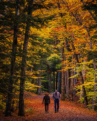 An Autumn Walk in the Woods (johnny4eyes1) Tags: autumn landscape calm peaceful nature peoplewalking maine hikers colors fallcolors fallfoliage fall travel couple hiking foliage outdoors path serene mtdesertisland scenic barharbor