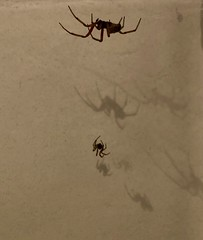 Photo of Spiders in the bathroom
