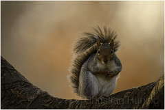 eastern gray squirrel (Christian Hunold) Tags: easterngraysquirrel rodent philadelphia christianhunold