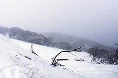 Mt Buller (Naomi Rahim (thanks for 5 million visits)) Tags: mtbuller mountbuller snow alpine mountains melbourne victoria australia 2019 nature landscape cold white travel travelphotography nikon nikond7200