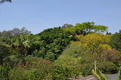 Mt Coot-tha Botanical Gardens (dok1969) Tags: trees flowers birds animals nature botanicalgardens brisbane queensland colour
