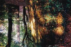 [bidimensional] (vaestermarea) Tags: 35mm yashica tl electro film analog photography landscape nature