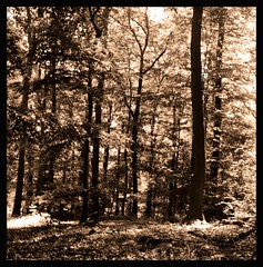 Autumn mood (Claudio Taras) Tags: bw biancoenero mediumformat medioformato shadow sepia analog fim 6x6 claudio contrasto controluce hanks lot