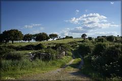 En plena primavera... (P e p a) Tags: naturaleza campos campo primavera extremadura nubes cielos paisaje