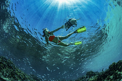 """Taylor reef play time (Cruising, traveling & dive pics.) Tags: 2019 pug sv """"taylorreef dog"""