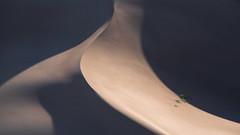 Windswept (virtualwayfarer) Tags: colorado unitedstatesofamerica crestone nature sand greatsanddunes sanddunes longlens greatoutdoors dunesdune wild usa southwest landscape outdoors nationalpark desert aweinspiring protected naturephotography pristine americansouthwest landscapephotography dramaticnature photographingamerica travel abstract beautiful beauty shadows natural scenic roadtrip windswept natgeo singleexposure sonyalpha sonynordic a7riii sonyamericas rockies windy continentaldivide coloradorockies travelphotographer alexberger