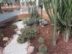Desert landscape, Arganzuela  Hot House, Madrid (d.kevan) Tags: pebbles stones bridge cacti succulents plants paths arganzuelahothouse madrid informationpanels windowa trees
