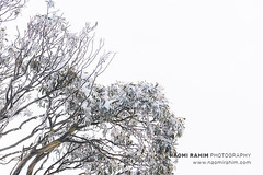 Mt Buller (Naomi Rahim (thanks for 5 million visits)) Tags: mtbuller mountbuller victoria australia 2019 landscape nature snow winter alpine bush rural travel travelphotography nikon nikond7200 minimalist white