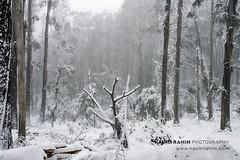 Mt Buller (Naomi Rahim (thanks for 5 million visits)) Tags: mtbuller mountbuller victoria australia 2019 landscape nature snow winter alpine bush rural travel travelphotography nikon nikond7200