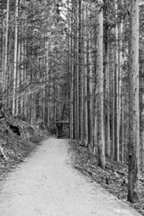 Mountain Path in Nagano (Emmanuel Z. Karabetis) Tags: 50mm f14 canon 6d nagano japan nippon jigokudani monkey monkeys park macaque macaques snow forest path black white bw hot spring springs onsen