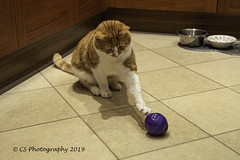 .... and action! -DSC_1797 (Chris Scopes) Tags: happycaturday mushy toy cat