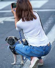 make memories, not photos (LightInThisWorld) Tags: 100400mmgm armisticeday lightinthisworld sony sonya7riii a7riii sanjose pet dog pug owner memories photos peopleandpets smileonsaturday woman puppy