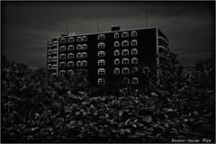 Flat... (SHADOWY HEAVEN) Tags: 190810g100021t 北海道 hokkaido 日本 ファインダー越しの私の世界 写真好きな人と繋がりたい 写真撮ってる人と繋がりたい 写真の奏でる私の世界 写真で伝えたい私の世界 coregraphy japan tokyocameraclub igers igersjp phosjapan picsjp モノクロ モノクローム モノクロ写真 白黒写真 bnwlife bnwdemand igersbnw noirshots monochrome mono monotone blackandwhite bw bnw blackwhite noiretblanc japaninbw blackwhitephotos bwartaward dark weeds grass surreal