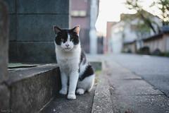 猫 (fumi*23) Tags: ilce7rm3 sel35f18f emount 35mm fe35mmf18 a7r3 animal alley street tokyo bokeh dof cat chat gato neko 猫 ねこ ソニー 路地
