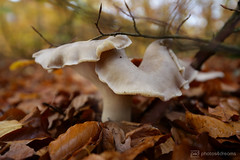 big mushroom (photos4dreams) Tags: spaziergang walk feld wald wiese forest trees bäume photos4dreams p4d photos4dreamz pilz pilze fungi fungus mushroom mushrooms susannahvvergau