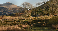 Hidden beauty. (PentlandPirate of the North) Tags: bobblehatcottage llanberis snowdonia northwales gwynedd