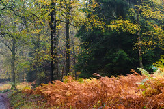 Mosaic of fall colors, pt. I (Erik van Ossenbruggen) Tags: mosaic fall colors couleurs automne autumn herfst kleuren belgië belgium ardennes ardennen aywaille ninglinspo stoumont nikon d750 70200mm