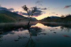 The tree (PentlandPirate of the North) Tags: lonetree llynpadarn llanberis snowdonia northwales gwynedd sillyphotoseriousmessage reflection