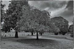 Grangegorman Military Cemetery (Dublin) (rickybon) Tags: dublin greatphotographers military cemetery riccardobonelli bw pentaxk5 pentaxflickraward pentaxart pentax k5