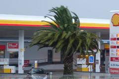 DSC00498 (jesust793) Tags: palmeras arboles trees palms naturaleza nature
