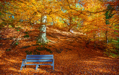 Autumn Collection - 13 - a place to rest (Dhina A) Tags: sony a7rii ilce7rm2 a7r2 a7r fe 24105mm f4 sonyfe24105mmf4 zoom lens bokeh sharp sel24105g autumn place rest collection park trees colorful colour red orange bench