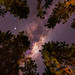 Milky Way at Jarrahdale Pines, Western Australia