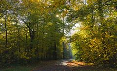 Morgenlicht im Wald (KaAuenwasser) Tags: morgenlicht licht sonne sonnenstern stern dunst nebel morgens wald herbst herbstlich farben farbe laub blätter blatt baum bäumen natur stimmung fasanengarten park karlsruhe