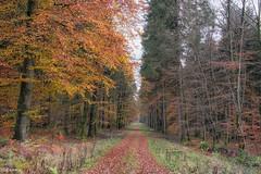 09112019-DSC_0011 (vidjanma) Tags: dinez arbres automne chemin couleurs forêt hêtres sapins