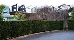 (Human-Faced Bun & Honey Pudding) Tags: residential street townscape town scape house road tree plant
