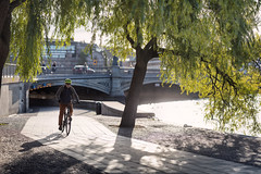 Stockholm, September 19, 2019 (Ulf Bodin) Tags: höst willowtree sverige sweden outdoor bike tegelbacken sun man urban bicycle tree biker cyklist träd streetphotography canonrf85mmf12lusm stockholm autumn canoneosr cykel urbanlife stockholmslän