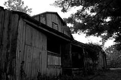 Barn View (pjpink) Tags: rustic abandoned overgrown blackandwhite bw monochrome uncolored colorless littlewashington washington virginia july 2019 summer pjpink 2catswithcameras