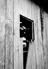Open Ended (pjpink) Tags: rustic abandoned overgrown blackandwhite bw monochrome uncolored colorless littlewashington washington virginia july 2019 summer pjpink 2catswithcameras