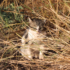 A friend (Argyro Poursanidou) Tags: colorful nature autumn stray animal cat kitty grass φύση φθινόπωρο γάτα αδέσποτο ζώο