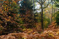 Mosaic of fall colors, pt. II (Erik van Ossenbruggen) Tags: mosaic fall colors couleurs automne autumn herfst kleuren belgië belgium ardennes ardennen aywaille ninglinspo stoumont nikon d750 70200mm