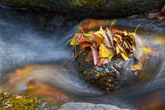 Sammelpunkt (sirona27) Tags: fluss wasser fliesend stein bewegung blätter farbig herbst