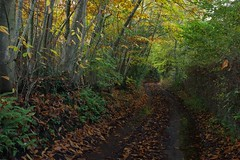 The road taken, an Autumn cycle ride around the Kent countryside....(Spot the Amanita citrine var.alba!) (favmark1) Tags: autumn cycle cycleride kent lane