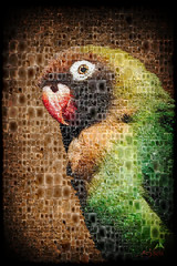 _MGL5440 Lovebird (SØS'Art) Tags: bill bird digiart digitalartwork art kunstnerisk manipulation solveigøsterøschrøder artistic eyes filterforge lovebird parrot photomanipulation photoshop studioartist nature 100views