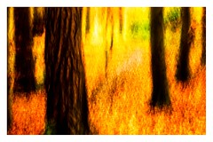 The Path (1 of 1) (ianmiddleton1) Tags: footpath woodland icm composite movement
