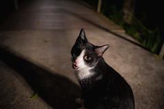 DSC08124 (Rex_Chen) Tags: 2019 cat sony a73 fe2870mm taiwan taipei