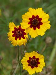 Spirit of Summer (Marit Buelens) Tags: eu belgium belgië flanders vlaanderen flower bloem blume fleur flores yellow red green summer garden