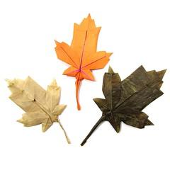 Maple Leaf - Brian Chan (Mariano Zavala B) Tags: maple leaf origami tutorial brian chan hoja canada