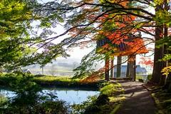 Colored-leaves (walkkyoto) Tags: 南丹市 龍穏寺 ryuonji 寺 temple 紅葉 京都 kyoto 日本 japan af30mmf14dchsm