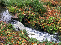 Day 320 After the rain (Dominic@Caterham) Tags: rain water waterfall grass pond leaves autumn