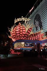 The lights of flamingo (Mauro Grimaldi) Tags: otr usaotr2019 america journey ontheroad realamerica travel trip usa vacations vancanzeinamerica viaggio lastrada lasvegas sincity lasvegasboulevard thestrip flamingohotel flamingo