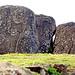 Chile-03354 - Petroglyphs