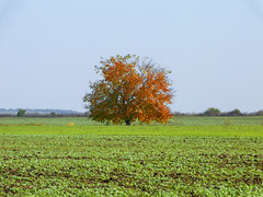 Colors of the fall (Dumby) Tags: landscape ilfov românia nature outdoor colors autumn fall