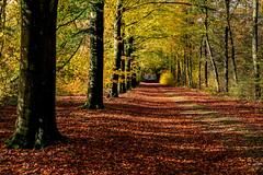 De oude bosweg (Pieter ( PPoot )) Tags: herfst bosweg kleuren diepte kinderkopjes